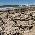Pajūrį ties Karkle nuklojo žuvų gaišenos