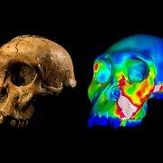 Ankstyvieji žmonių protėviai neturėjo stiprių žandikaulių