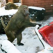 Beždžionės Kauno zoologijos sode
