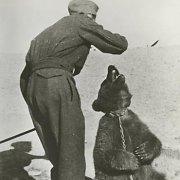 Antrasis pasaulinis karas: kaip lokys Wojtekas tapo lenkų armijos kapralu
