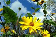 Kaip pagerinti nuotaiką? Saulė šviečia visada!