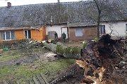 Vėtra Lietuvoje: per parą ugniagesiai 48 kartus rūpinosi išverstais medžiais