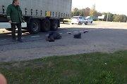 "Kelyje ""Via Baltica"" prie Truskavos po vilkiko ratais palindo motoroleris"