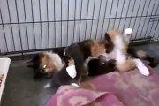 Video: stebuklas gyvūnų globos namuose