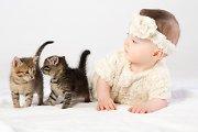 Pirmasis pasimatymas: kaip katės ir šunys reaguoja į kūdikius