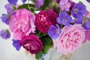 """Rožių draugijos pirmininkė N. Karpavičienė: """"Rožėms reikia dėmesio, meilės ir trupučio žinių"""""""