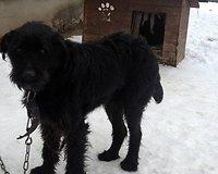 Šuo iš Vosyliukų kaimo (Vilnius)