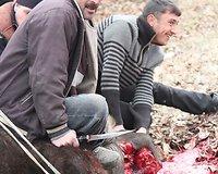 Halal - būdas paskersti gyvulius