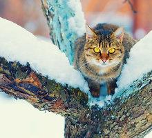 Orai.lt: žiema laikysis tvirtai