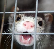 Gyvūnų teisių gynėjai žiaurius vaizdus paviešino per vėlai?