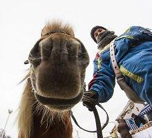 Dusetose vyksta tradicinės Sartų žirgų lenktynės