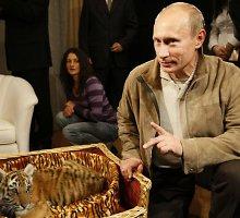 """Kinijos šiaurės rytuose """"Putino tigras"""" papjovė 15 ožkų"""