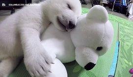 Baltojo lokio jauniklė privers nusišypsoti net ir didžiausią paniurėlį
