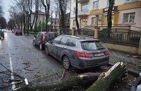 Klaipėdoje ant važiuojančio automobilio užvirto medis