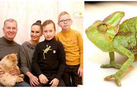 Ingos ir Dariaus Budrių namuose nauji augintiniai – chameleonai