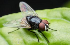 Nuodingi, bet naudingi: kuo padeda musės, driežai, skorpionai ar vorai?