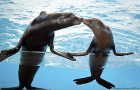 Jūrų muziejus atsakys į klausimą: kas bendro tarp kurėno ir džiovintos žuvies?