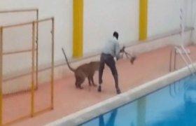 Nufilmuota: Indijoje leopardas įsėlino į mokyklą ir užpuolė 4 žmones
