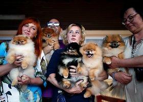 Tarptautinė šunų paroda Izraelyje