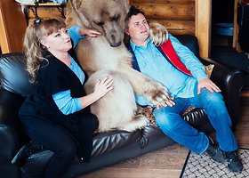 Per 300 kg sveriantis lokys rusų šeimoje gyvena kaip pilnateisis narys