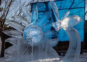 """Kanadoje vyksta ledo skulptūrų festivalis """"Ice on Whyte"""""""