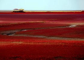 Nepaprastas raudonomis balandomis apaugęs paplūdimys Kinijoje