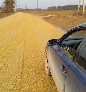 Auksinis kelias: ūkininkas duobėtą kelią užlygino grūdais