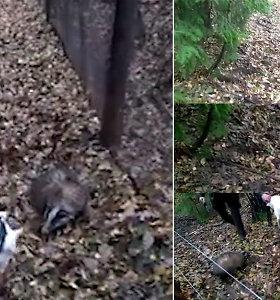 Šiurpus medžiotojų hobis: po lauko bandymų uždanga – žiaurus elgesys su gyvūnais
