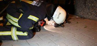 Žiaurumo protrūkis Šilutėje: skandintas ir į šiukšlių konteinerį išmestas šuo neišgyveno