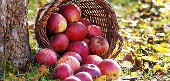 Rusija uždraudė vaisių ir daržovių importą iš Ukrainos