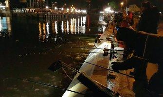 Klaipėdoje Danės krantinę naktį apgulė šimtai stintų mėgėjų