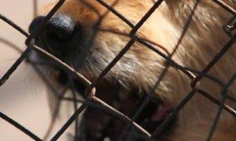 Paežerių kaime šuo žiauriai apkandžiojo penkiametį ir jo motiną