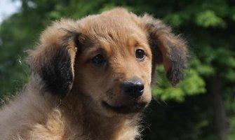 Marijampoliečiai kaltina kaimynę iš ketvirto aukšto išmetus savo šunį