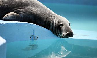 Žuvys lede ir šaldytos uogos – tokiais ledais vėsinami Kauno zoologijos sodo gyvūnai