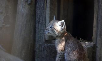 Lietuvos Zoologijos sodas rugsėjo 1-ąją pasitiks įspūdingai
