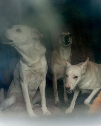 Taline moteris bute baisiomis sąlygomis laikė 10 šunų: jų išmatos siekė langus