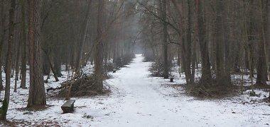 Tvarkomas Vilniaus Vingio parkas
