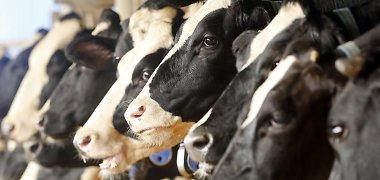 Anykštėnai naikina pieno ūkius: numirti neduoda,gyventi neleidžia