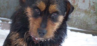 Viešas gyvūnų globos organizacijų kreipimasis į Seimą dėl žiauraus elgesio su gyvūnais atvejų padažnėjimo