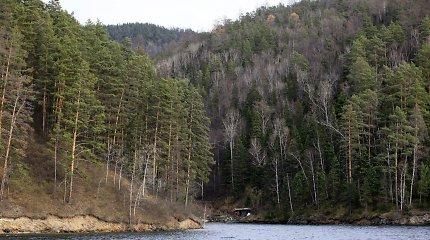 Tikina, kad iš Lietuvos miškų galima išspausti 15 kartų daugiau vertės