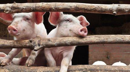 Afrikinis kiaulių maras nustatytas Anykščių rajone