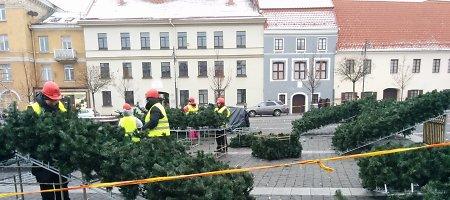 Vilniaus Rotušės aikštėje statoma Kalėdų eglė