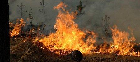 Bus sprendžiama, ką daryti su Smiltynėje išdegusiu mišku