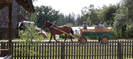 Arklio muziejus Anykščių rajone – vienintelis toks Baltijos šalyse