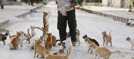 Sirijoje greitosios vairuotojas kasdien maitina apie 150 benamių kačių