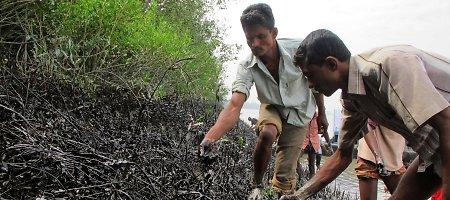 Bangladeše – ekologinė katastrofa, mazutą žmonės renka plikomis rankomis