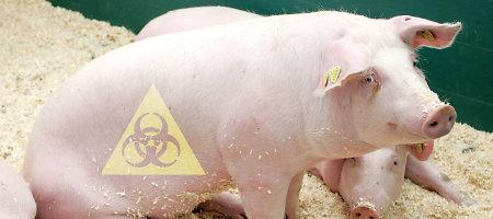 Estija siekia, kad EK visiškai kompensuotų afrikinio kiaulių maro išlaidas