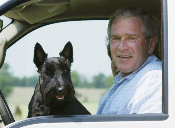"""Reuters""/""Scanpix"" nuotr./ George'o W. Busho šuo Barney"