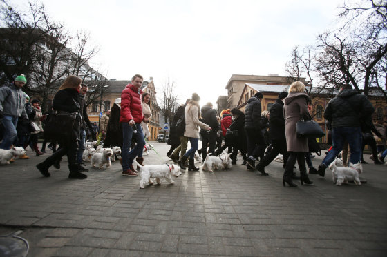 Eriko Ovčarenko/15min.lt nuotr./Šuniukų eisenos akimirkos
