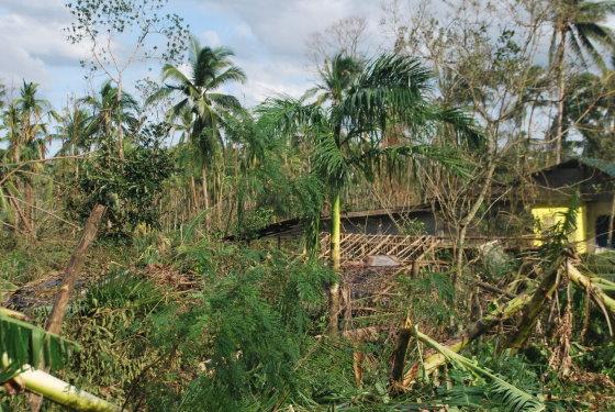 Vaizdas po taifūno – rojaus kampelio sala nebepriminė.